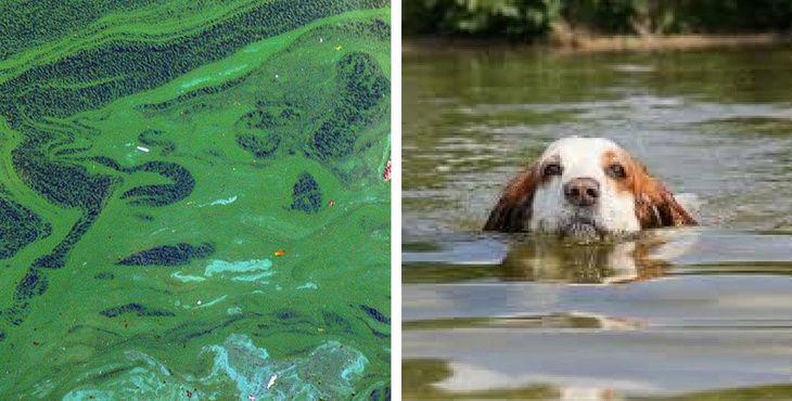 Trois chiens sont morts après s'être baignés dans la rivière Cher 20953710