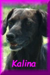 FERMETURE REFUGE DE BACKA   - Page 8 Kalina11