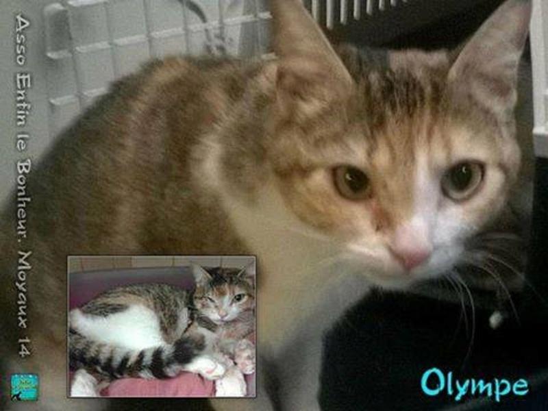 OLYMPE. Chatte tigré et blanc née en 2013 adoptée par Aline et Dimitri en Avril 2015 et SPEEDY type chartreux adopté en Septembre 2014. 10501810
