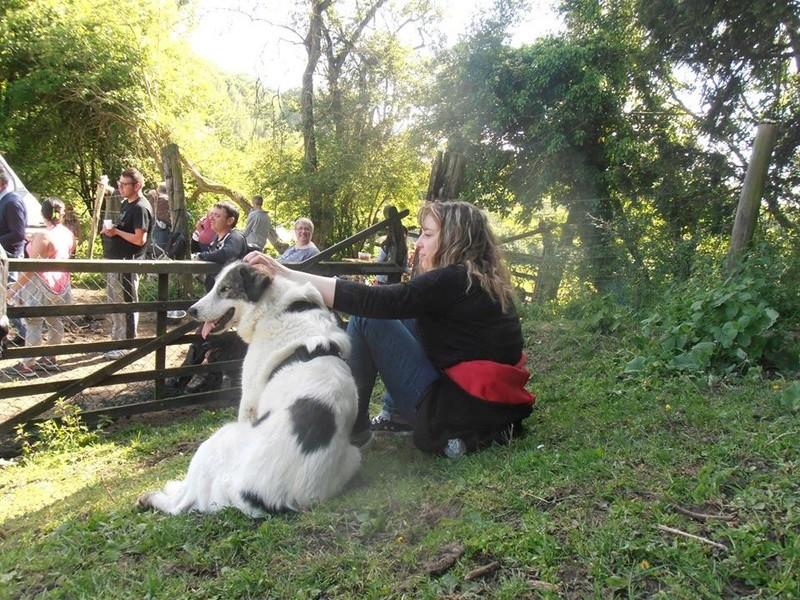 BALROG. Mâle croisé berger de Bucovine sorti de fourrière de Pascani (roumanie) en janvier 2014. Adopté par Claire MJ en Juin 2015 11392910