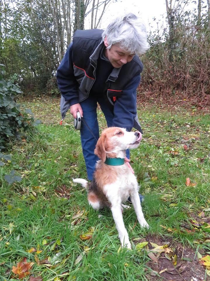 SKY mâle croisé Beagle/Fox né en 2010. Adopté par Pauline le 4 Fevrier 2018 14938110
