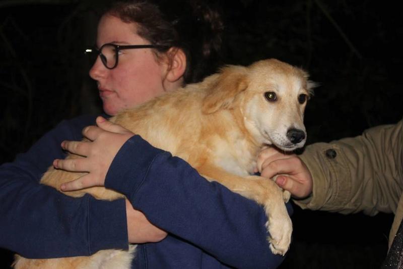 Leetchi. (fourrière de Piatra Neamt) femelle de race croiséé née le 24 Avril 2017 Adoptée par Nadia en Janvier 2018 21979211
