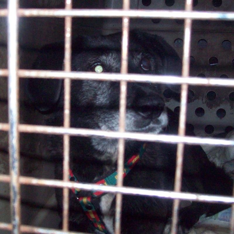 SCARLET, femelle croisée né en 2004. En panier retraite chez Angélique depuis Juillet 2014.parrainée par Olga 21_fev11