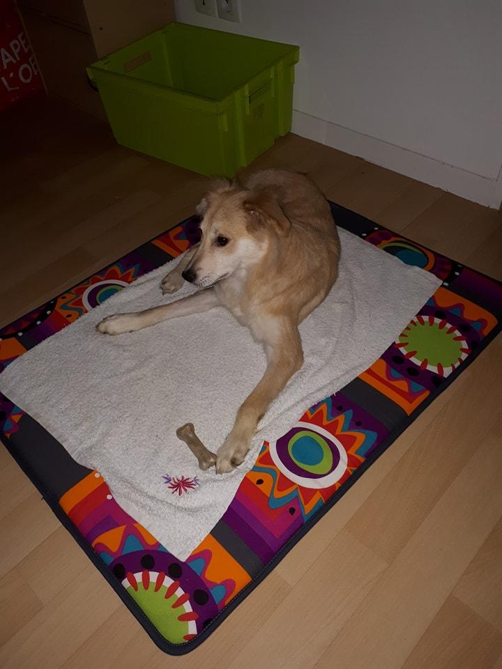 Leetchi. (fourrière de Piatra Neamt) femelle de race croiséé née le 24 Avril 2017 Adoptée par Nadia en Janvier 2018 22053010