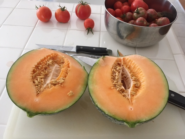 Your favorite watermelon and pumpkin  Cantal10