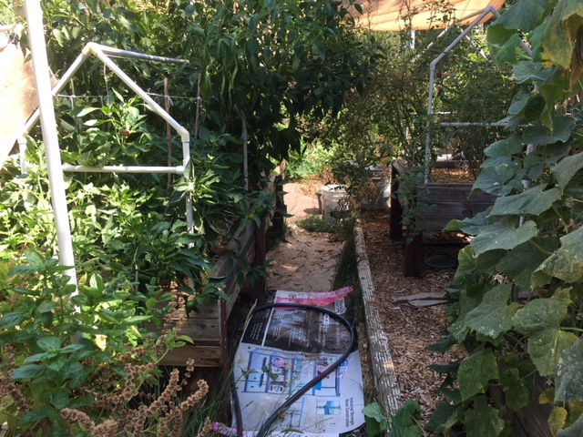 Northern California & Coastal Valleys - What are you doing this month? - Page 6 Garden10