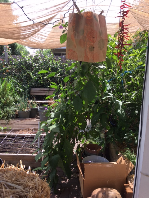 2 - California - What are you doing this month? - Page 6 Garden12