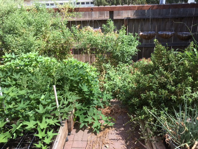 2 - California - What are you doing this month? - Page 6 Garden13