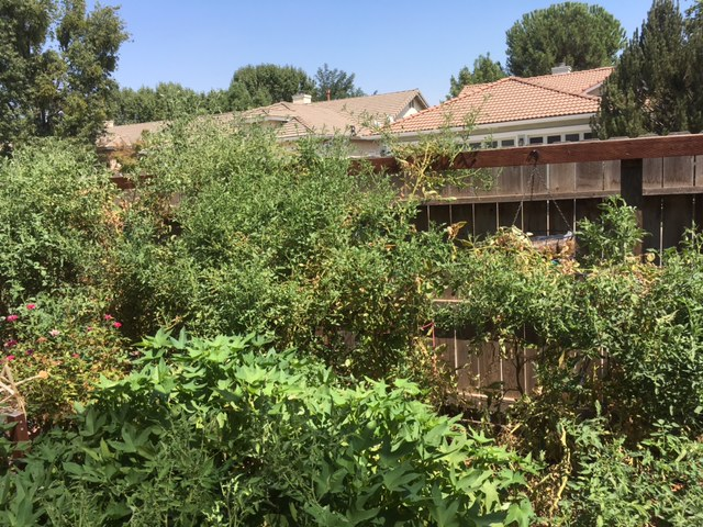 2 - California - What are you doing this month? - Page 6 Garden14
