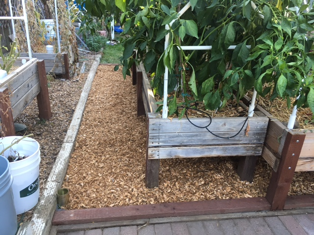 Northern California & Coastal Valleys - What are you doing this month? - Page 6 Garden19