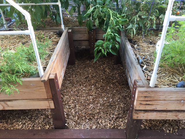 2 - California - What are you doing this month? - Page 6 Garden23