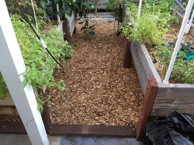 2 - California - What are you doing this month? - Page 6 Garden24