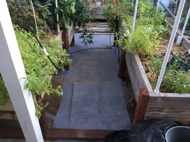 2 - California - What are you doing this month? - Page 6 Garden25
