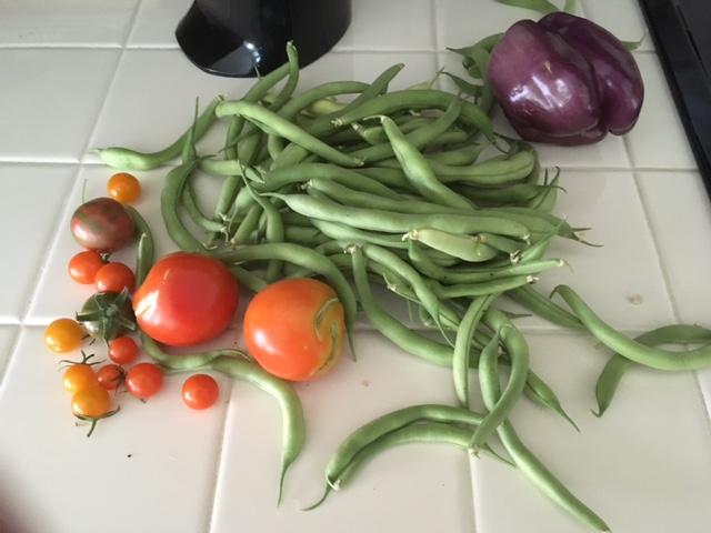 Today's Harvest Harves10
