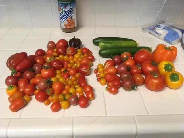 Today's Harvest Harves11