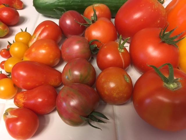 Today's Harvest Tomato19