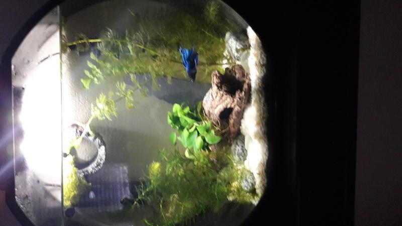 Débutante: évolution de l'aquarium et demande votre avis  20170711