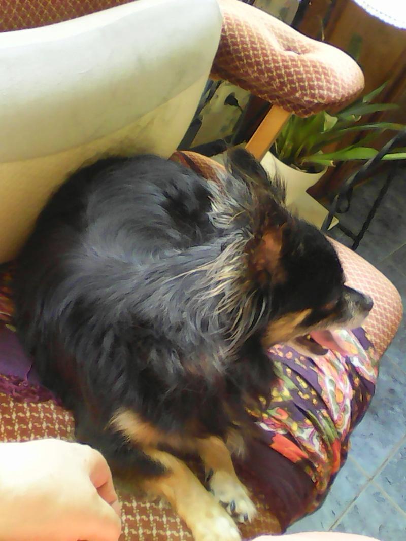 IDYLLE, drôle de vie pour cette Chihuahua de 4 ans !! Img00410
