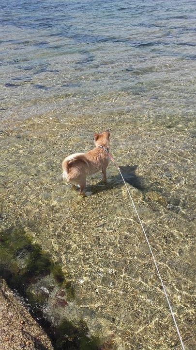 KAYA - 2 ans - petite croisée fox et ??? Mer10