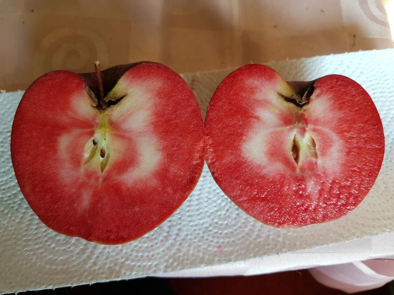 Was für Obstsorten habt Ihr denn im Garten? Aussaat, Spalier, Beerensträucher, Erfahrung und Hilfe :) - Seite 13 20170816