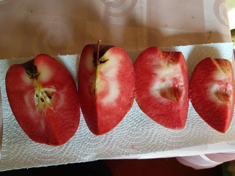 Was für Obstsorten habt Ihr denn im Garten? Aussaat, Spalier, Beerensträucher, Erfahrung und Hilfe :) - Seite 13 20170817