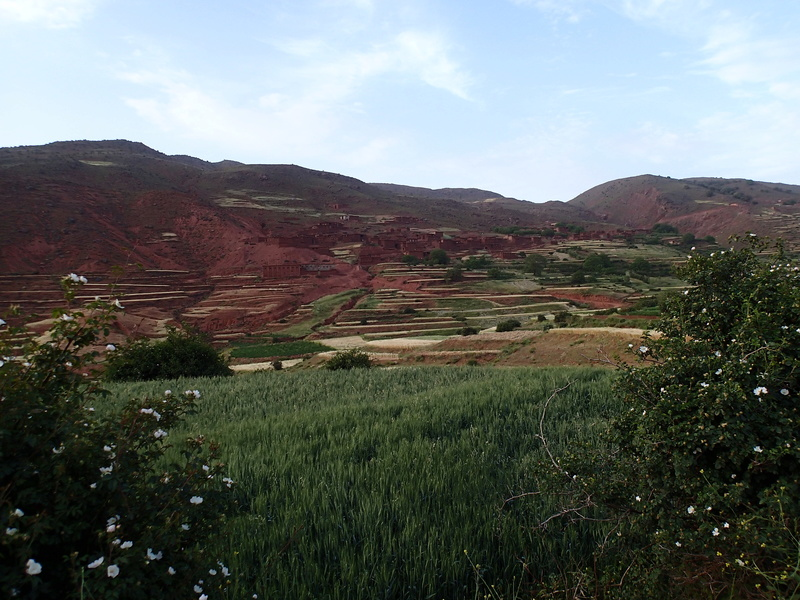 Haut Atlas de Marrakech a Figuig - Juin 2017 P6070212