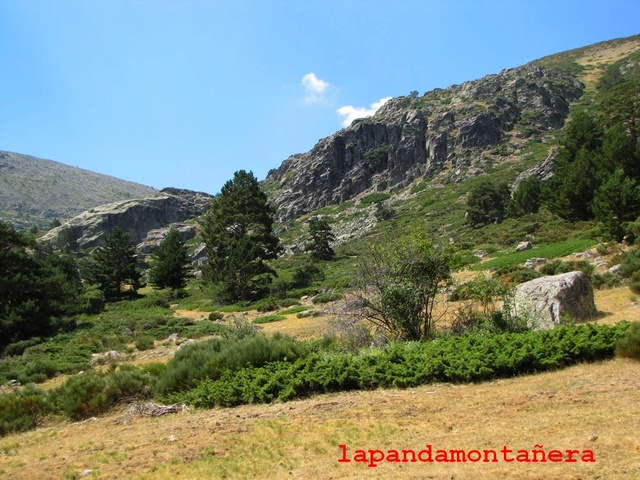 20170805 - EL PINGANILLO - TEJO DEL BARONDILLO 01113