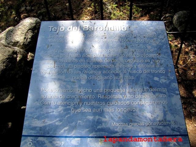 20170805 - EL PINGANILLO - TEJO DEL BARONDILLO 02214