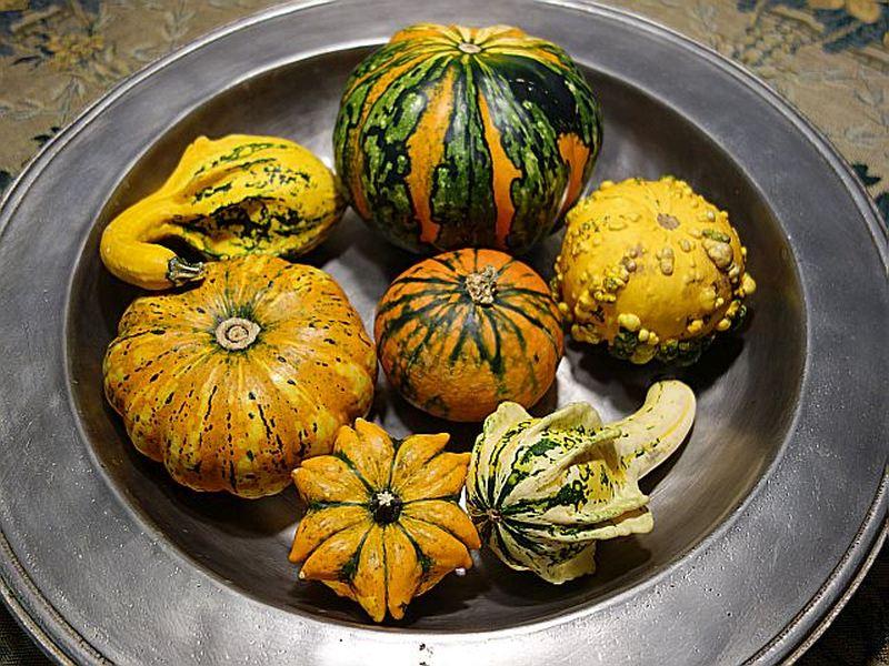 Kürbisgewächse - Cucurbitaceae: Melonen, Gurken, Kürbisse und Zucchini - alle Verteter der nichtsukkulenten Arten - Seite 5 Dsc06937