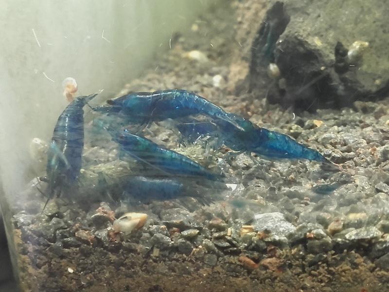 Projet d'un 1er bac à crevettes, conseils bienvenus :)  20170710