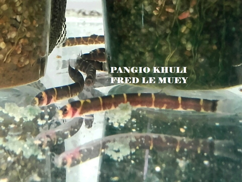 a supprimer vendu svp Pangio10