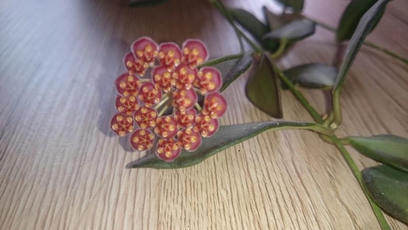 Blüten 2017 - Seite 4 Dsc_0422