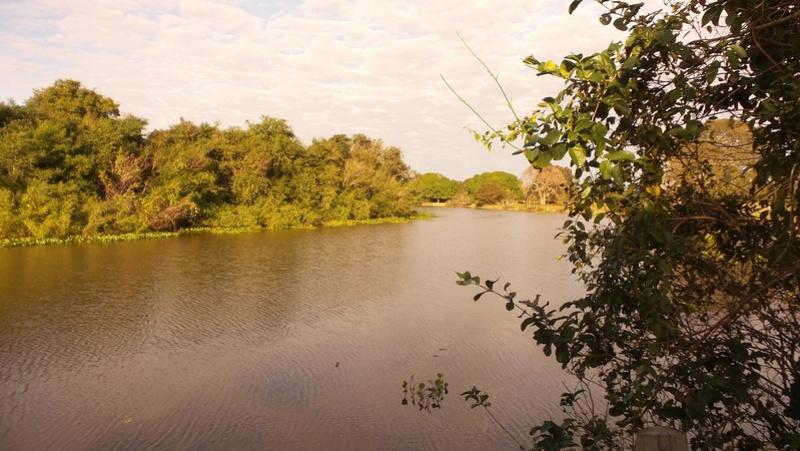 Le 22.06.2017 Le Pantanal Nord. 20170677