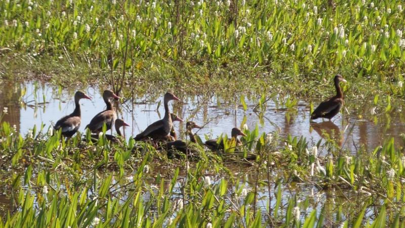 Le 22.06.2017 Le Pantanal Nord. 20170678