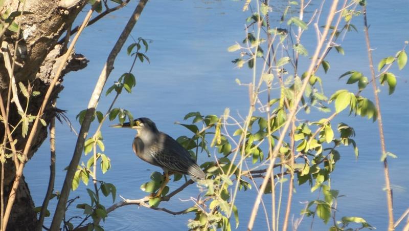 Le 22.06.2017 Le Pantanal Nord. 20170679