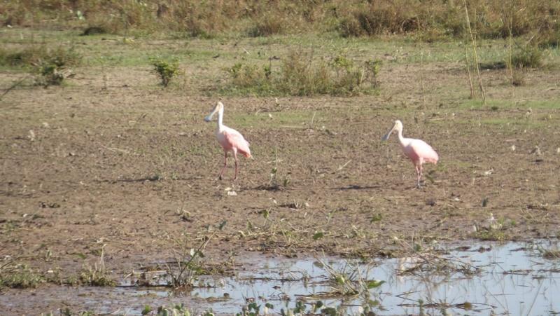 Le 22.06.2017 Le Pantanal Nord. 20170683