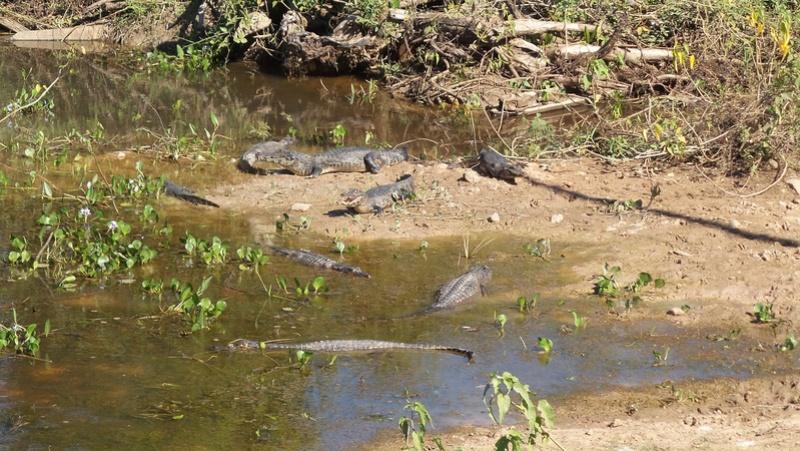 Le 22.06.2017 Le Pantanal Nord. 20170685