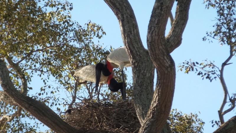 Le 22.06.2017 Le Pantanal Nord. 20170687