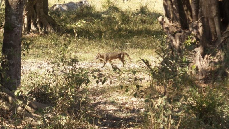 Le 22.06.2017 Le Pantanal Nord. 20170695