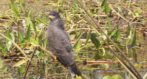 Le 22.06.2017 Le Pantanal Nord. 20170697