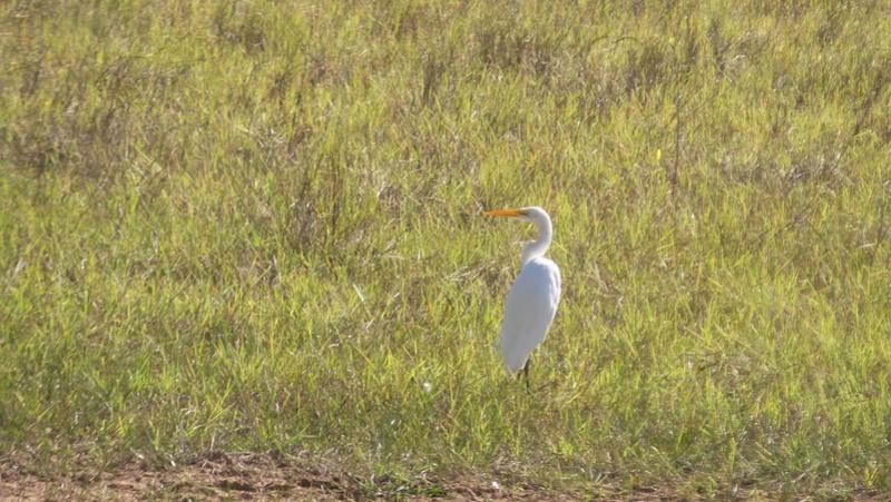 Le 22.06.2017 Le Pantanal Nord. Garya_12