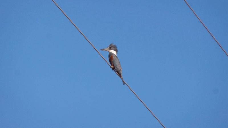 Le 22.06.2017 Le Pantanal Nord. Grand_10