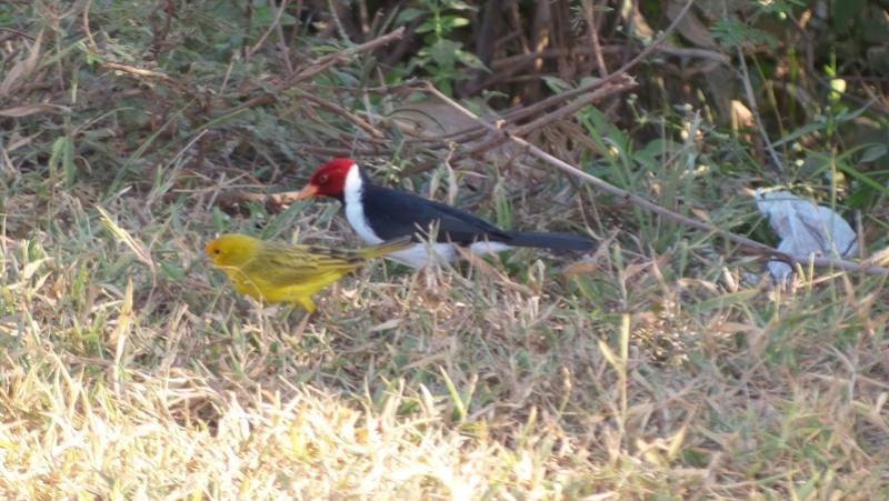 Le 22.06.2017 Le Pantanal Nord. Joanin10