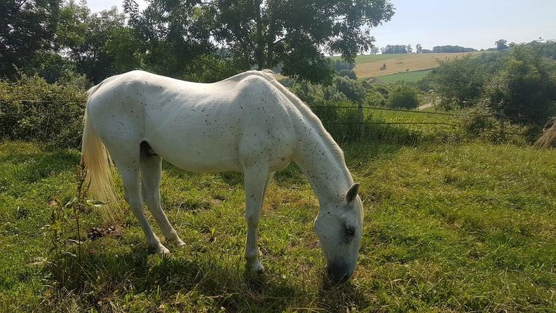 QUIKLY - Lippizan né en 2004 - adopté en mai 2011 par doucette  Quickl24