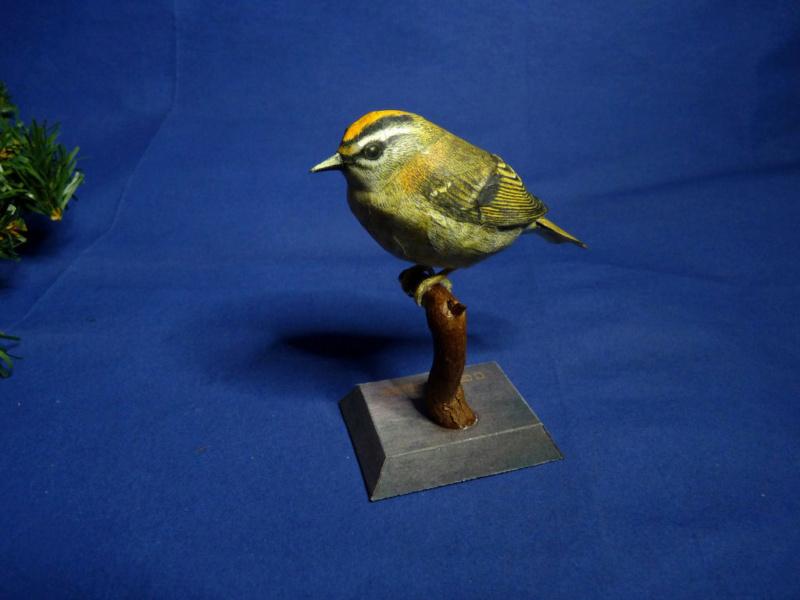 Meine Kartonvögel Goldha11