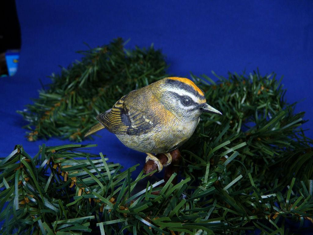 Meine Kartonvögel Goldha13