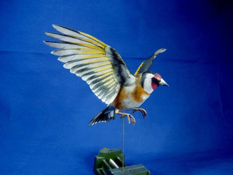 Meine Kartonvögel Stiegl12