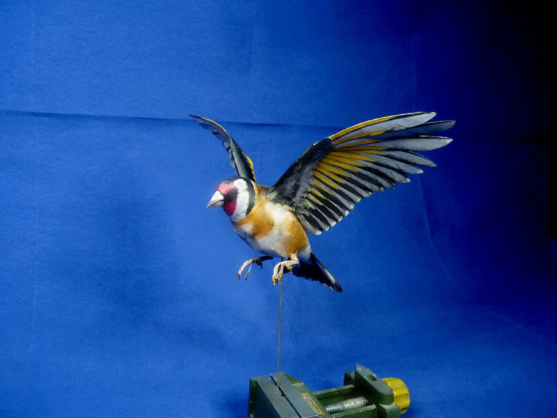 Meine Kartonvögel Stiegl13