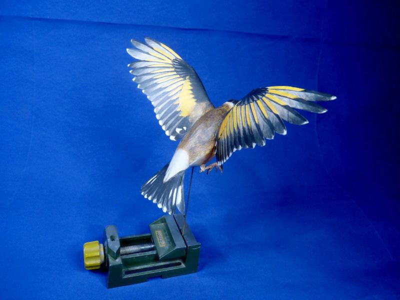 Meine Kartonvögel Stiegl14