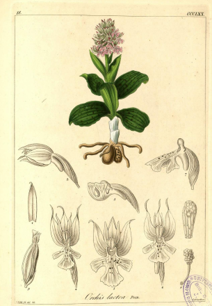 REICHENBACH ORCHIDEES 1850  Captur14